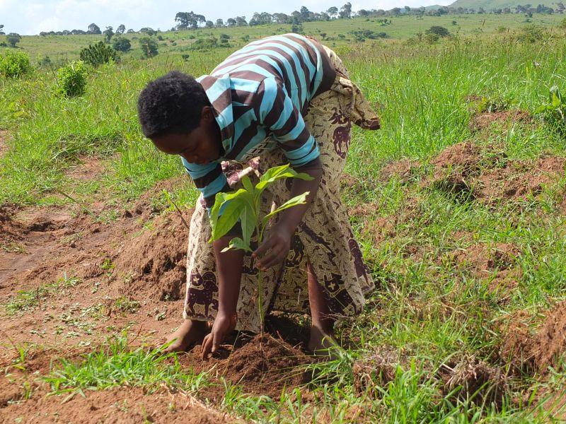 Bäume pflanzen in Sumbawanga